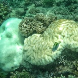 Gili Gede corals